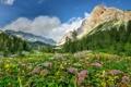 Картинка деревья, цветы, горы, камни, скалы, поляна, ущелье