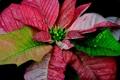 Картинка листья, осень, растение, цвет