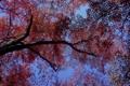 Картинка осень, небо, листья, дерево, крона