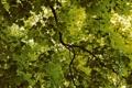 Картинка листья, природа, фото, дерево