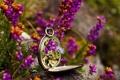 Картинка макро, цветы, часы