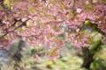 Картинка листья, цветы, ветки, дерево, весна, розовые, цветение