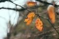 Картинка осень, листья, ветка, оранжевые