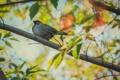 Картинка фото, птица, воробей, canon, листья, обои, макро