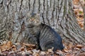 Картинка осень, кошка, дерево