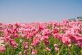 Картинка лето, небо, цветы, природа, Поле, лютики