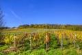 Картинка поле, Германия, кусты, плантация, Senheim