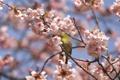 Картинка цветы, дерево, птица, ветка, весна, цветение, желтая