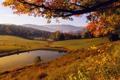 Картинка природа, листья, желтый, осень