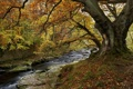 Картинка природа, осень, река