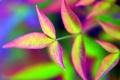 Картинка листья, природа, цвет, ветка