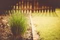 Картинка зелень, трава, растение, двор, зеленая