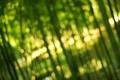 Картинка Bamboo, свет, зелень, боке, бамбук