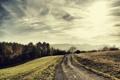 Картинка дорога, деревья, природа, пейзажи, дороги, photo, foto