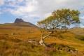 Картинка небо, трава, дерево, гора, склон