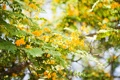 Картинка листья, цветы, куст, боке
