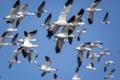 Картинка небо, птицы, полёт
