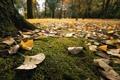 Картинка макро, деревья, природа, парк, листва, мох, каплм