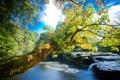 Картинка деревья, река, камни, течение, листва, водоворот, берега