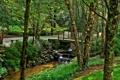 Картинка США, река, фото, природа, ствол дерева, парк, Ground Gibbs Gardens