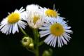 Картинка цветы, лепестки, стебель, соцветие