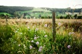 Картинка лето, трава, природа, забор