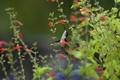 Картинка зелень, трава, цветы, птица, колибри