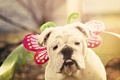 Картинка карнавал, взгляд, собака