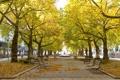 Картинка деревья, город, скамья