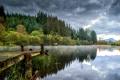 Картинка лес, вода, деревья, тучи, отражение, река, берег