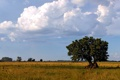 Картинка облака, поле, небо, дерево