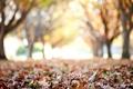 Картинка wallpaper, autumn, деревья, macro, фон, широкоформатные, макро