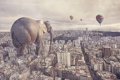 Картинка город, слон, ситуация