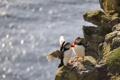 Картинка море, птицы, блики, скалы, берег, пара, puffin