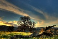 Картинка лес, Grass, Trees, трава, Wood, холмы, Hills