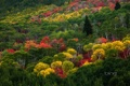 Картинка осень, лес, пейзаж, обои, листва, склон, багрянец