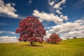 Картинка tree, autumn, sky, grass, cloud