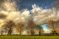 Картинка поле, небо, облака, деревья, природа, весна