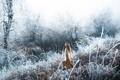 Картинка лес, девушка, снег, Lizzy Gadd, Winter Frost