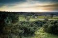 Картинка поле, пейзаж, природа