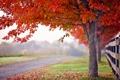 Картинка дорога, осень, дерево, забор