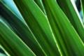 Картинка макро, фото, листок, растения, листки, стебельки, green macro