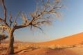 Картинка песок, природа, дерево
