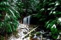 Картинка зима, лес, снег, водопад, хвойный