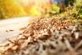 Картинка дорога, листья, макро, природа