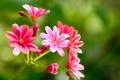 Картинка макро, природа, растение, лепестки, соцветие