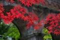 Картинка листья, осень, арка, природа, мост, ветка