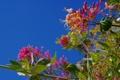 Картинка небо, листья, цветы, ветки