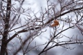 Картинка лёд, ветки, зима, холод, одинокий, лист, макро