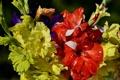 Картинка фото, Цветы, Крупным планом, Гладиолусы